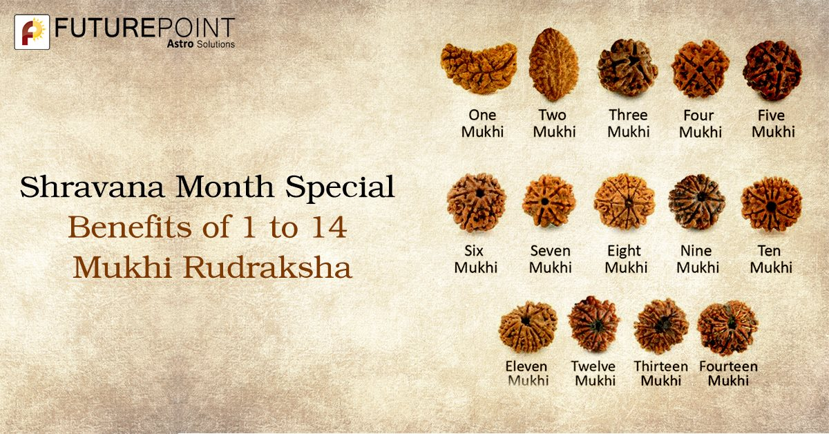 Shravana Month Special: Benefits of 1 to 14 Mukhi Rudraksha