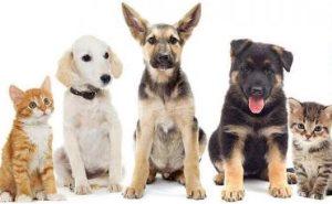 आपके घर में रहने वाले कुत्ते-बिल्ली खिंच लेते हैं नकारात्मक ऊर्जा