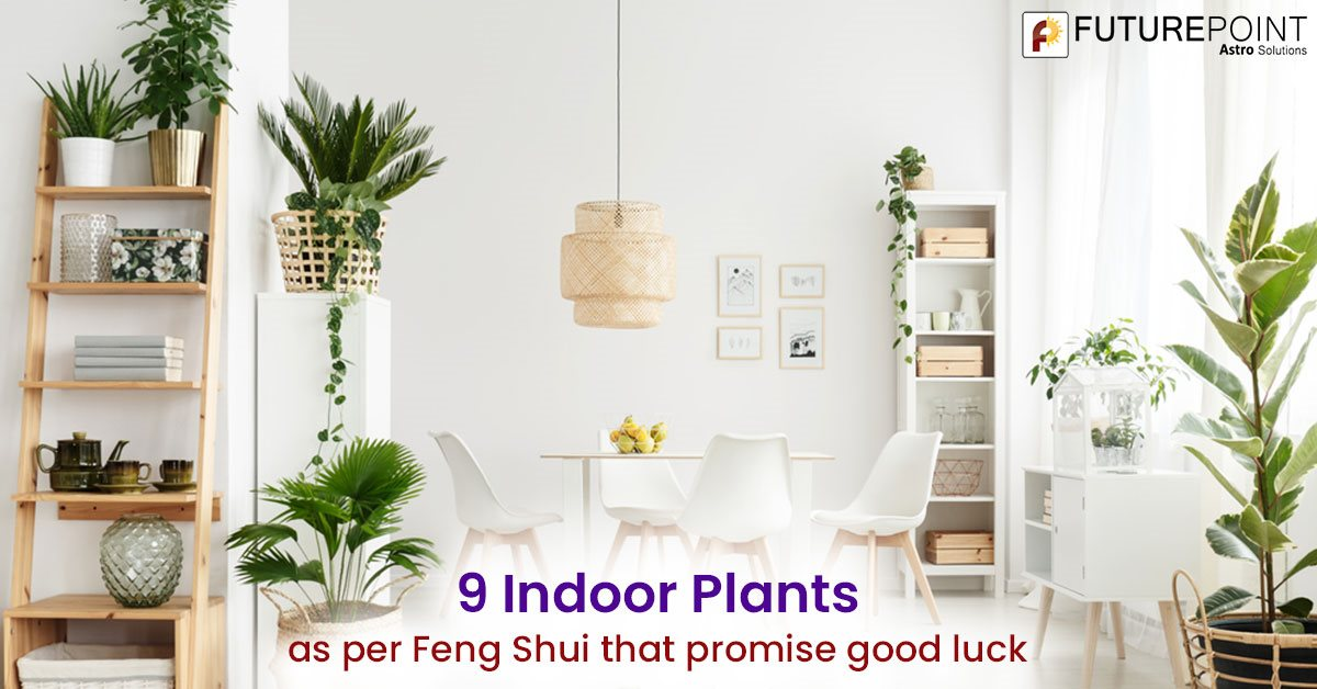 9 Indoor Plants as per Feng Shui that promise good luck