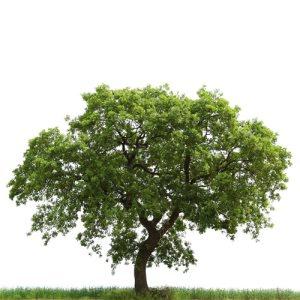वृक्ष के उपयोग