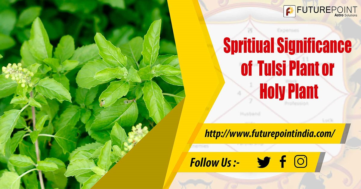 Spiritual Importance of Tulsi Plant or Holy Plant