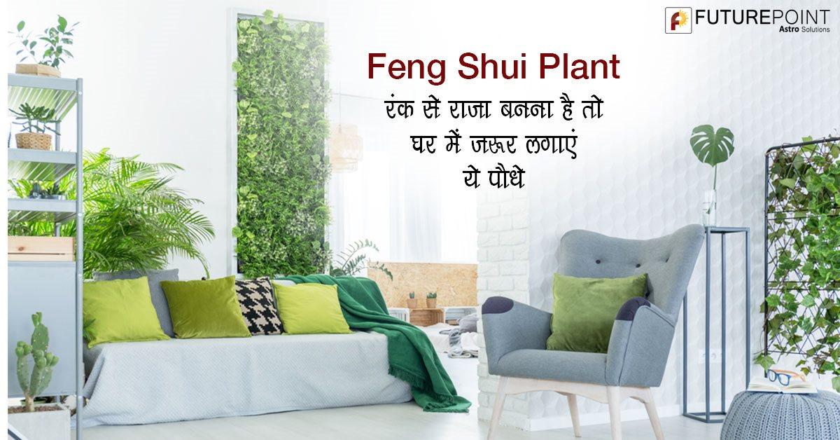Feng Shui Plant: रंक से राजा बनना है तो घर में ज़रूर लगाएं ये पौधे
