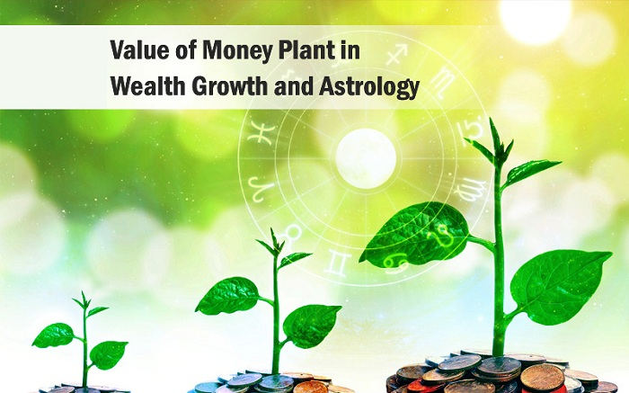 Money Plant in Astrology